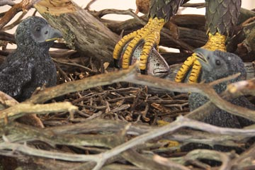baby-eaglets-in-nest